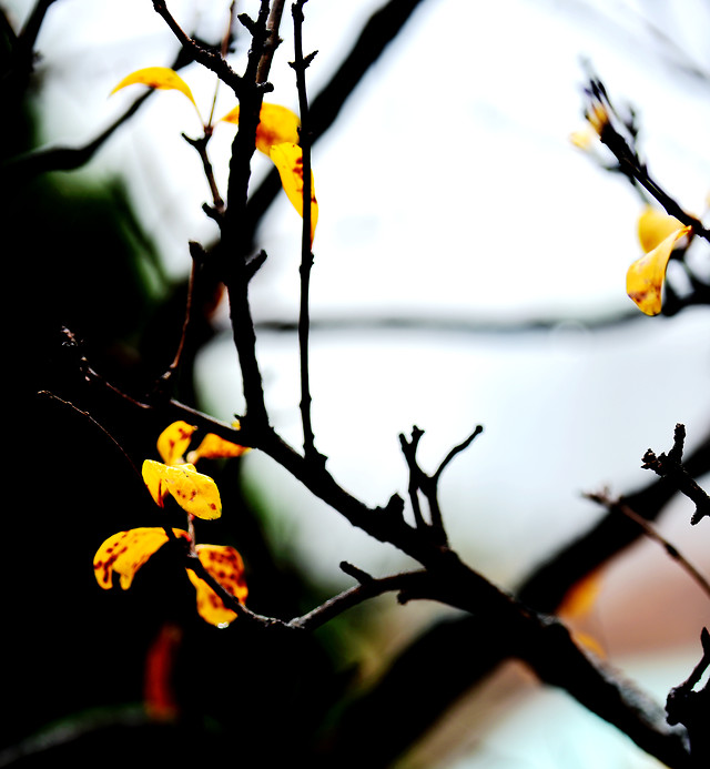 flower-tree-leaf-branch-fall picture material