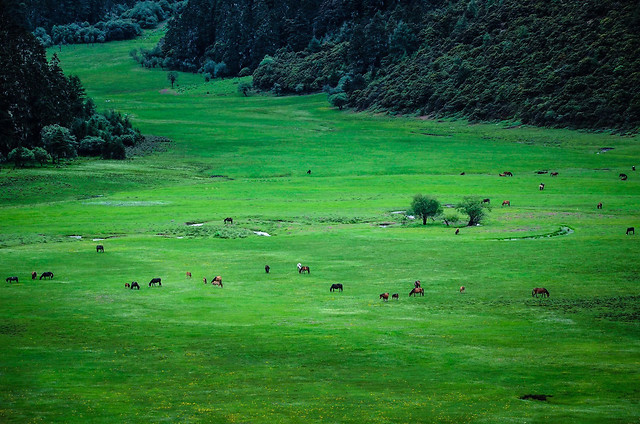 grass-landscape-grassland-green-nature 图片素材