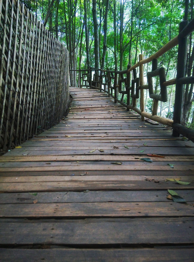 wood-wooden-guidance-tree-boardwalk 图片素材