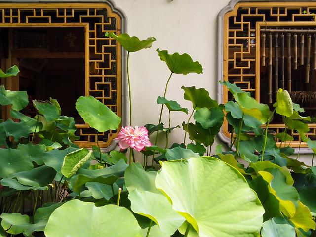 leaf-flora-flower-garden-plant picture material