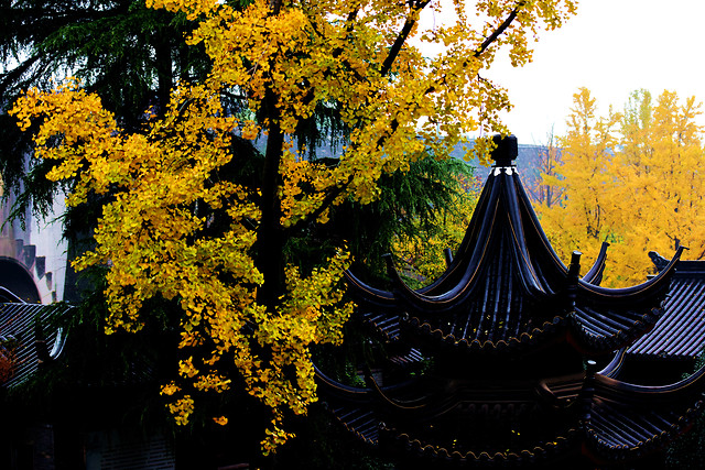 fall-leaf-wood-tree-no-person 图片素材