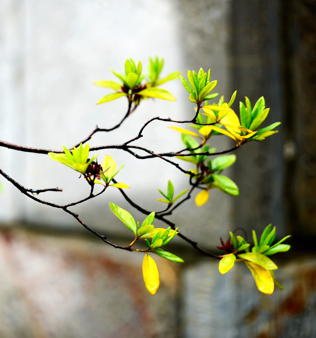 nature-flower-leaf-branch-tree picture material