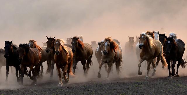 mammal-cavalry-horse-equestrian-mare 图片素材