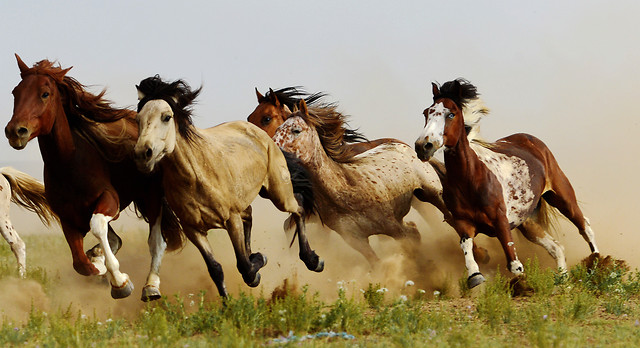 mammal-horse-mare-animal-stallion picture material