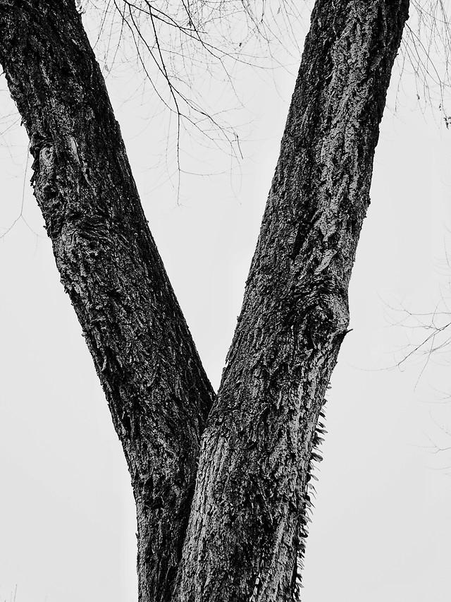 tree-wood-trunk-bark-nature 图片素材