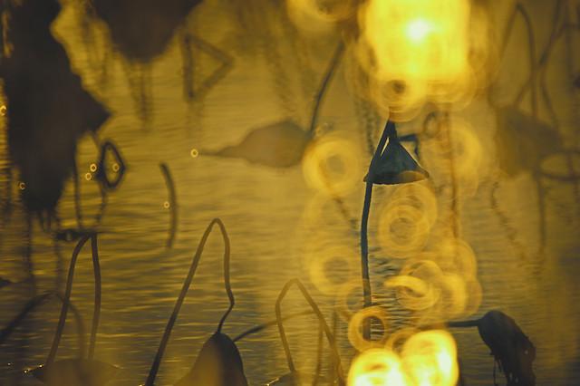 blur-yellow-light-desktop-art picture material