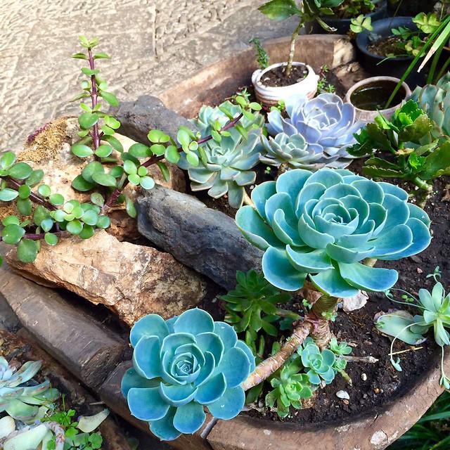 flower-flora-pot-nature-garden picture material