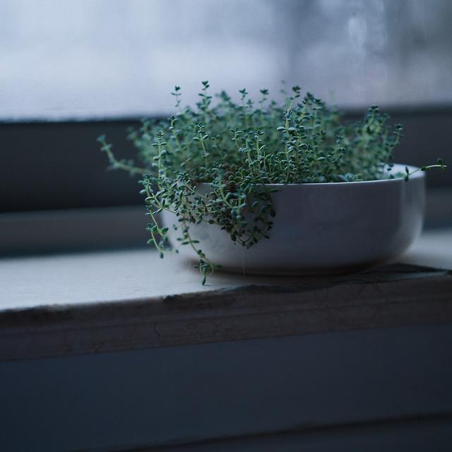 herb-medicine-flora-leaf-herbal picture material
