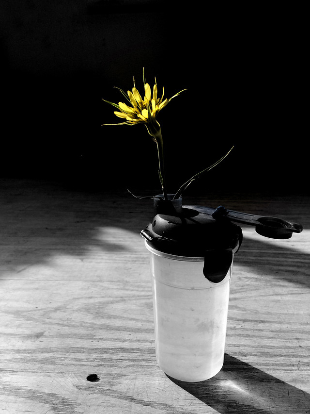 no-person-still-life-black-white-nature-yellow picture material