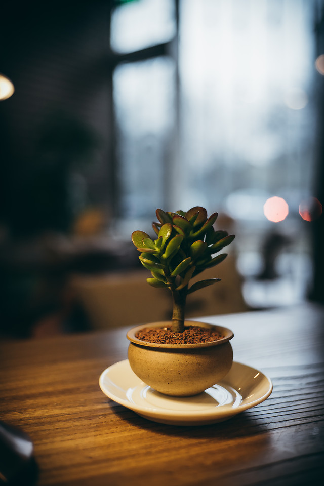 coffee-still-life-no-person-cup-table picture material