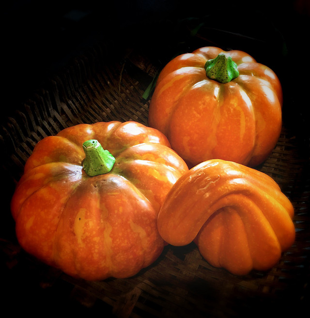 pumpkin-halloween-food-fall-grow 图片素材