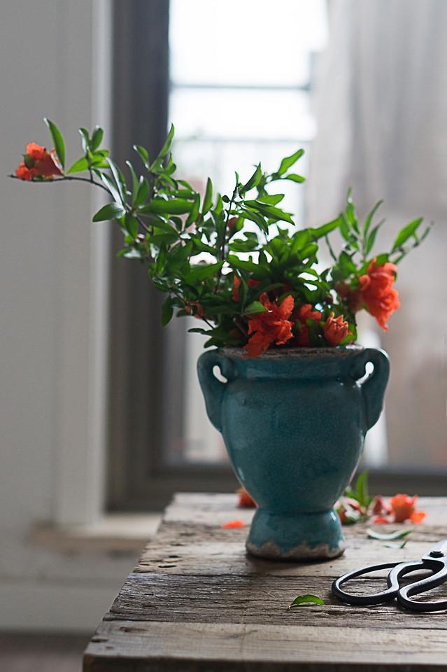 vase-pot-flower-no-person-leaf picture material