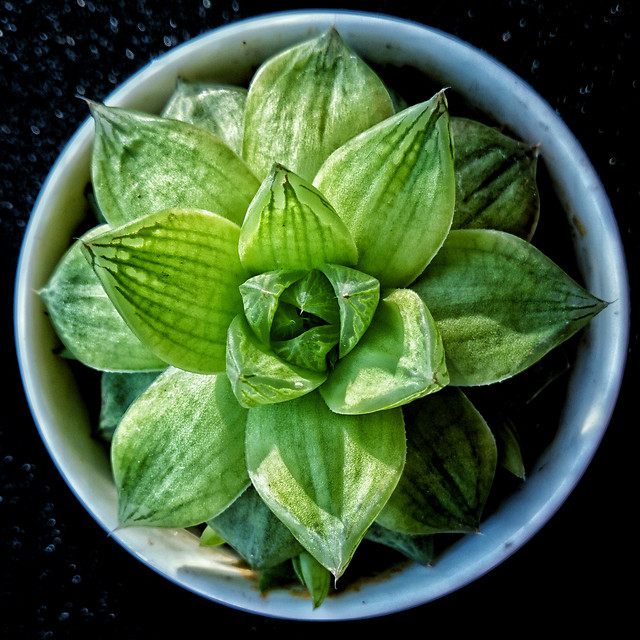 leaf-basil-food-no-person-herb picture material
