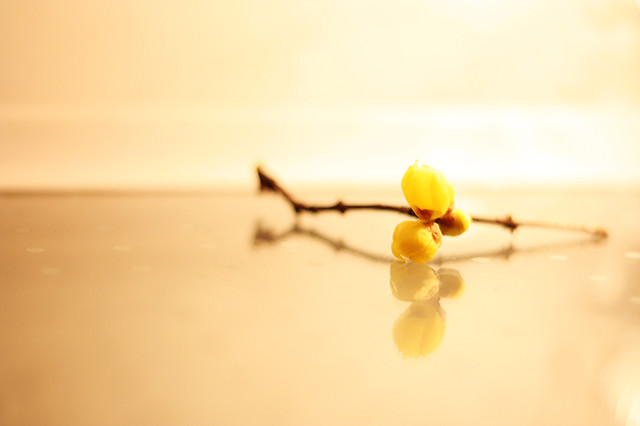 blur-no-person-nature-dof-yellow picture material