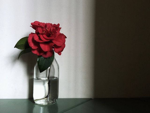 vase-flower-no-person-love-decoration picture material