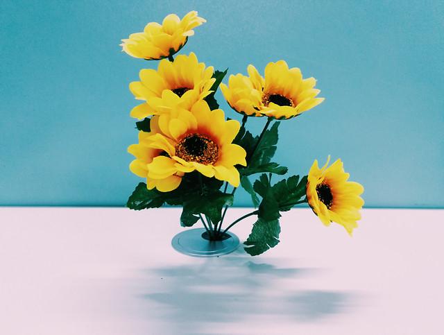 flower-nature-flora-summer-leaf picture material