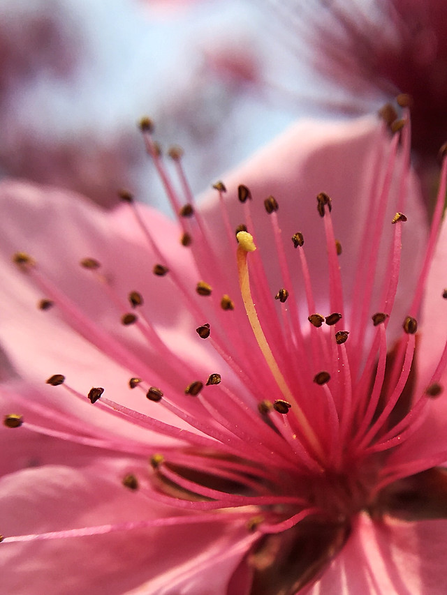 flower-nature-flora-no-person-garden picture material