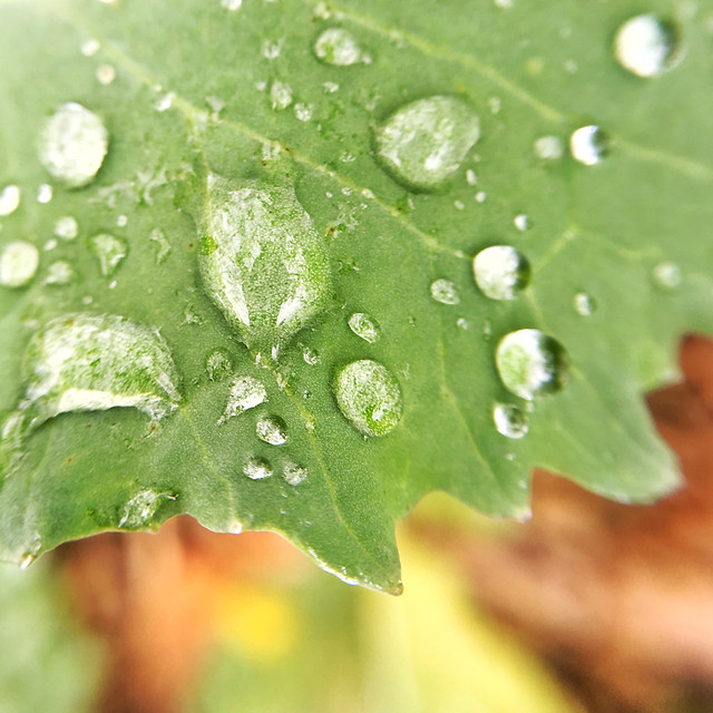 rain-dew-leaf-droplet picture material