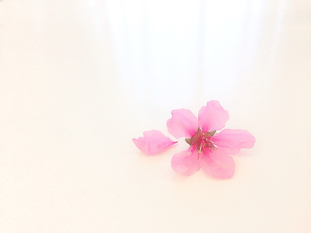 flower-nature-no-person-pink-petal picture material