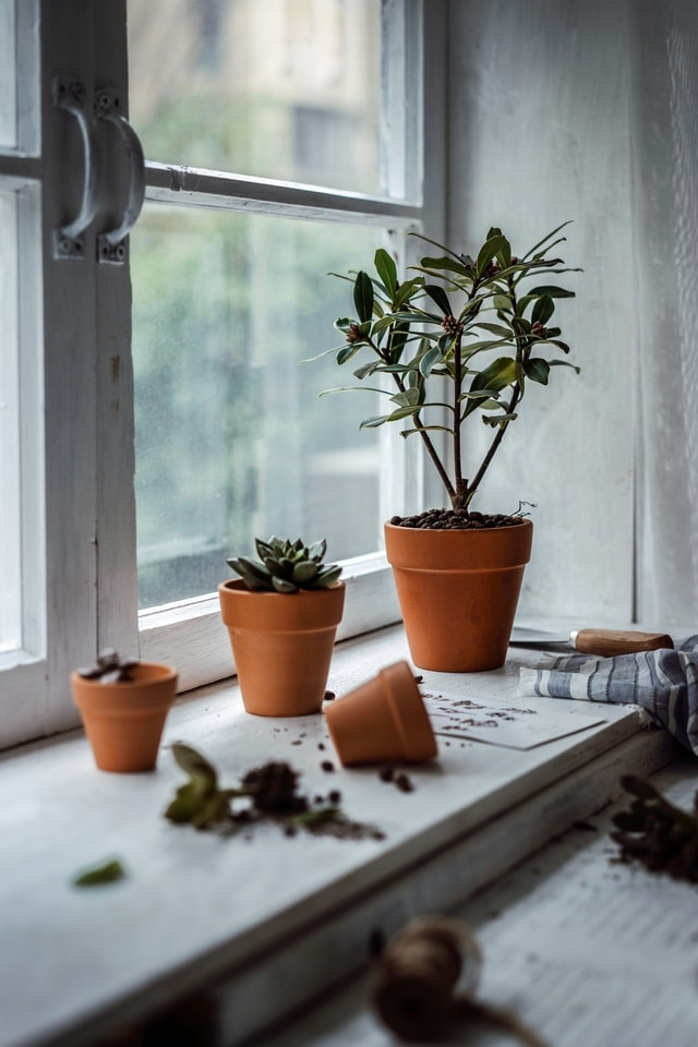 green-plant-still-life-life-flowerpot-houseplant picture material