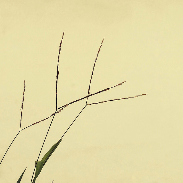 nature-summer-sun-flora-grass picture material