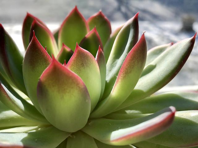 lotus-nature-exotic-flora-tropical picture material