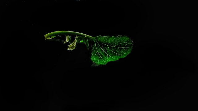 green-leaf-darkness-macro-photography-organism picture material
