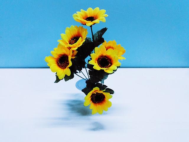 flower-nature-no-person-color-flora picture material