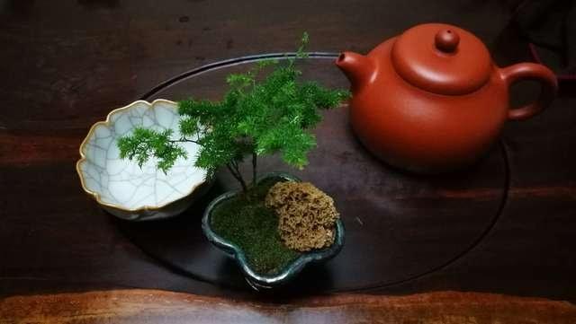 tea-food-no-person-pot-tableware picture material