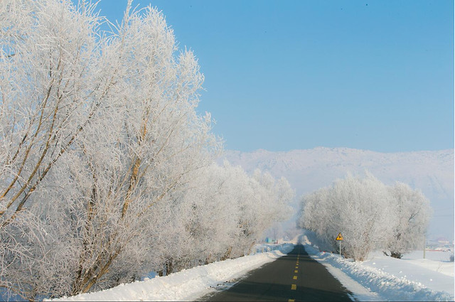 snow-winter-frost-cold-ice 图片素材