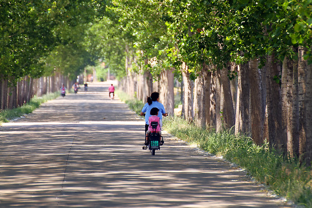 road-tree-guidance-nature-park picture material