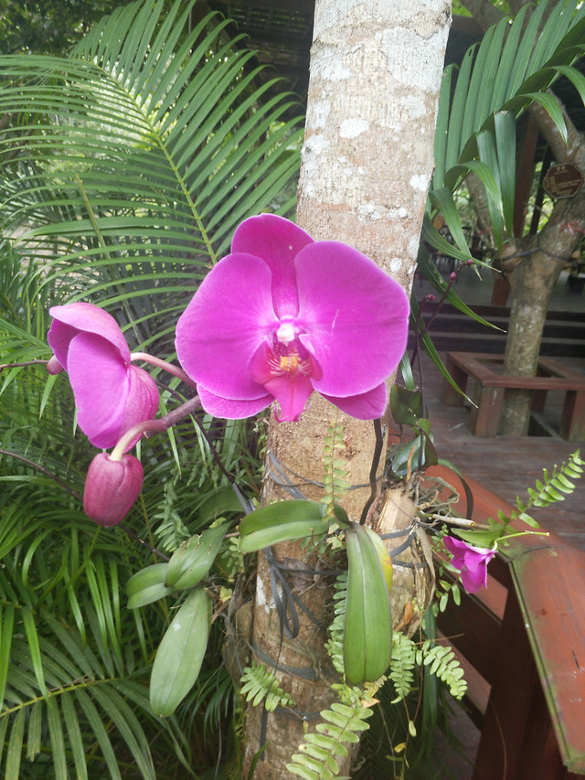 tropical-flower-exotic-plant-nature picture material
