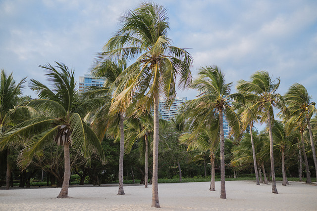 palm-no-person-tropical-sand-beach picture material