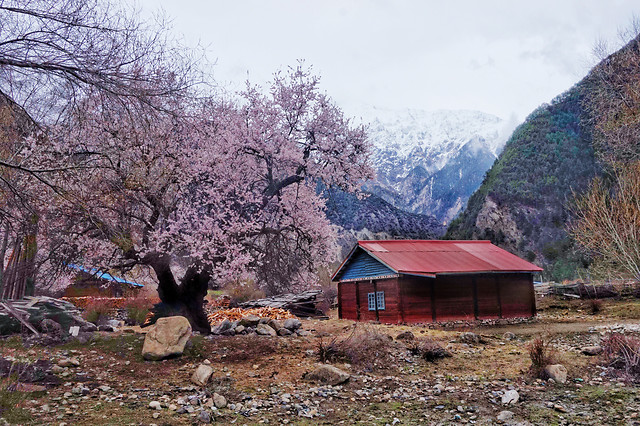 tree-landscape-mountain-house-no-person 图片素材