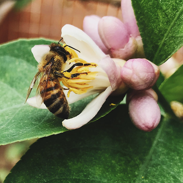 insect-bee-nature-honey-no-person picture material