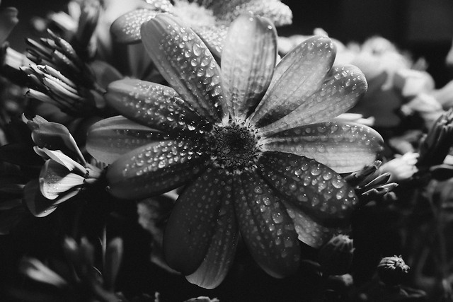 no-person-flower-nature-black-and-white-monochrome-photography picture material
