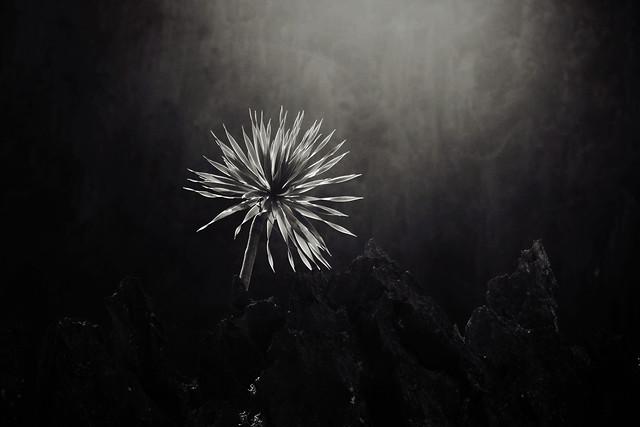 no-person-monochrome-fireworks-nature-black picture material