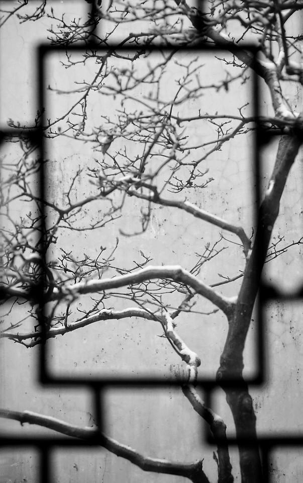 tree-branch-no-person-winter-black-white 图片素材