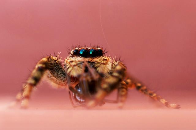 insect-spider-invertebrate-nature-arachnid picture material