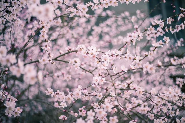 春,花 picture material