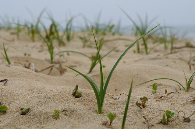 nature-sand-summer-beach-no-person picture material