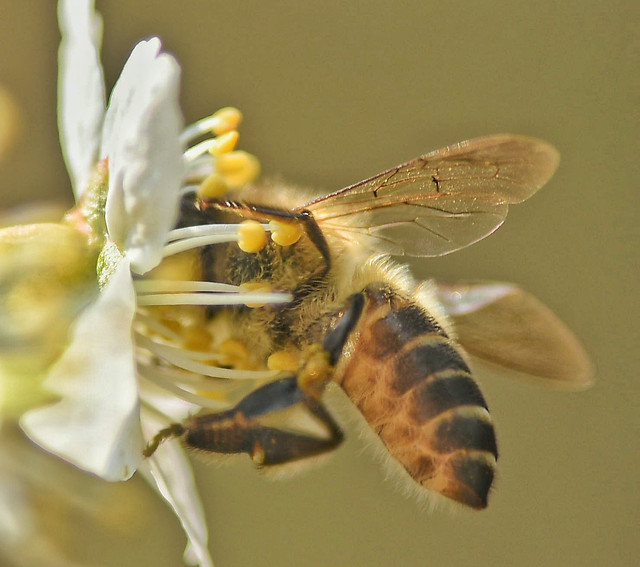 insect-nature-bee-flower-animal picture material