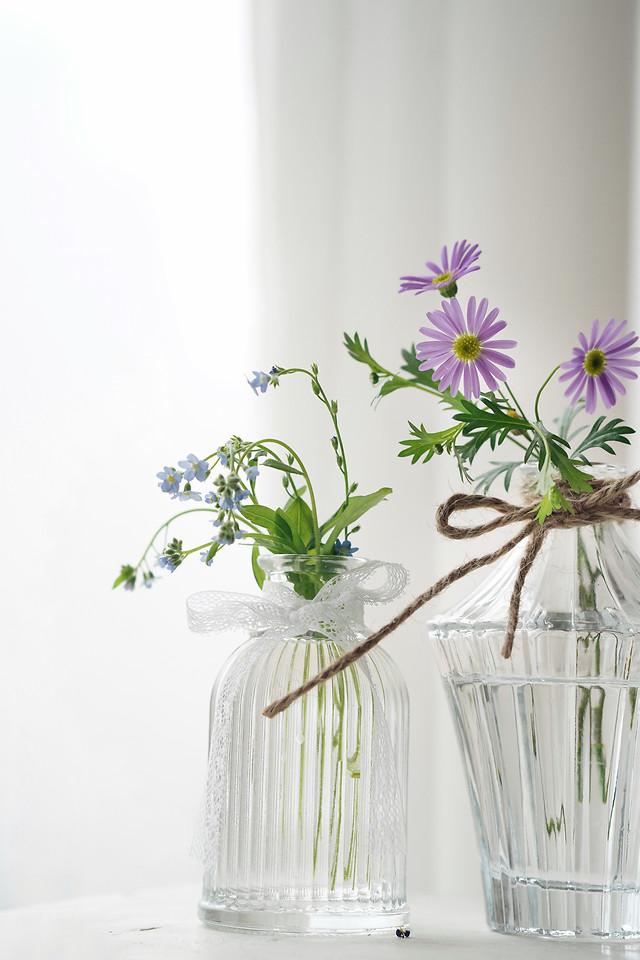 flora-nature-flower-vase-leaf picture material