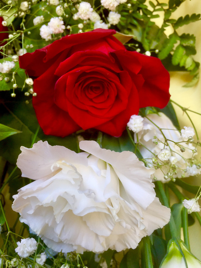 wedding-rose-bouquet-romance-flower picture material