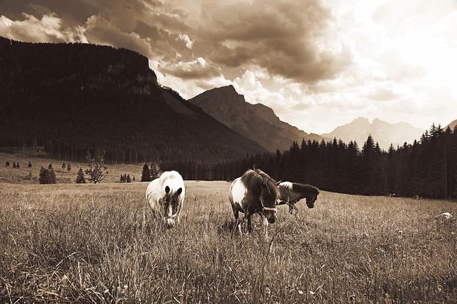 no-person-landscape-grass-pasture-hayfield 图片素材
