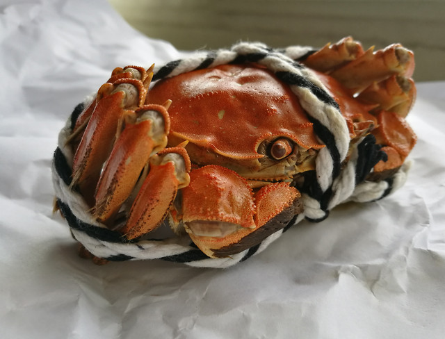 shellfish-seafood-no-person-crustacean-food 图片素材