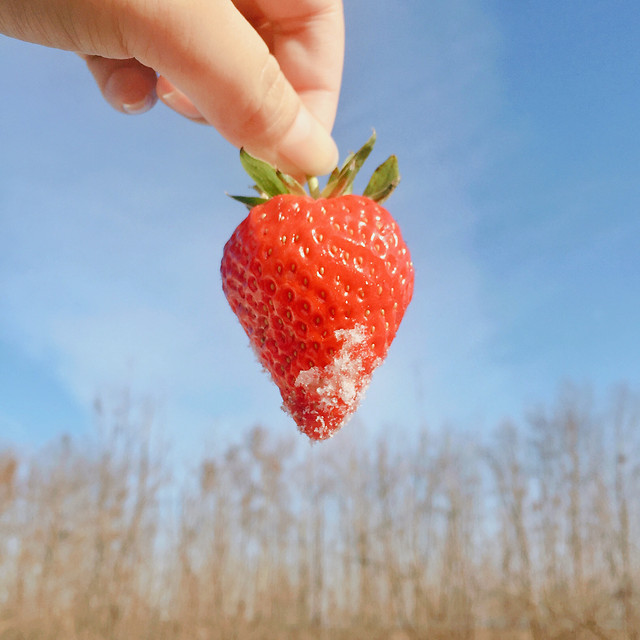 fruit-nature-berry-summer-strawberry picture material