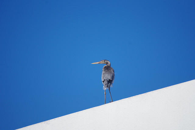 no-person-sky-bird-blue-wildlife picture material