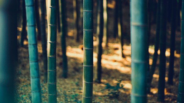 no-person-bamboo-nature-wood-green picture material