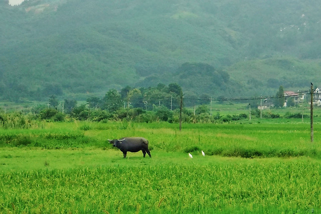 agriculture-field-pasture-grass-farm picture material